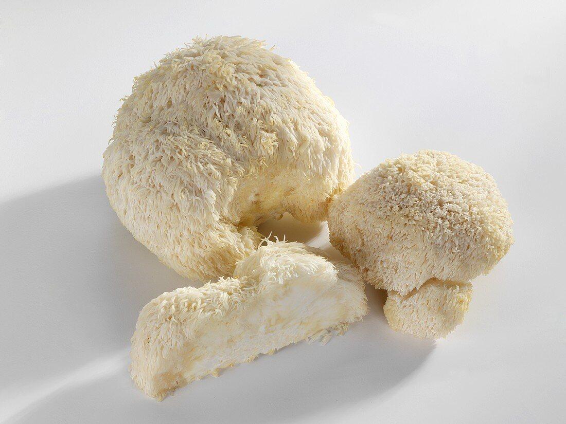 Affenkopfpilze (Hericium erinaceus)