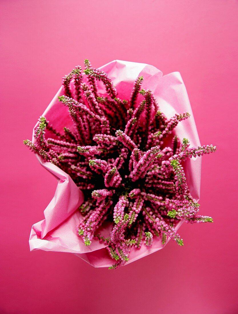 Pink heather in a flowerpot
