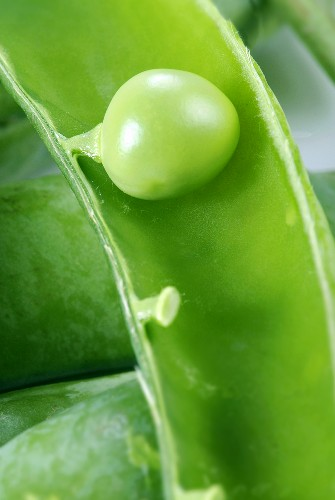 A pea in a pod (close-up)