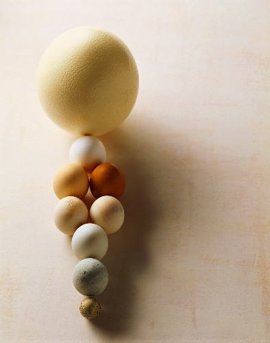 Still life with various types of eggs