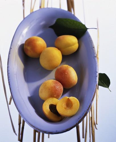 'Sekerpare' apricots (Prunus armeniaca) in a bowl