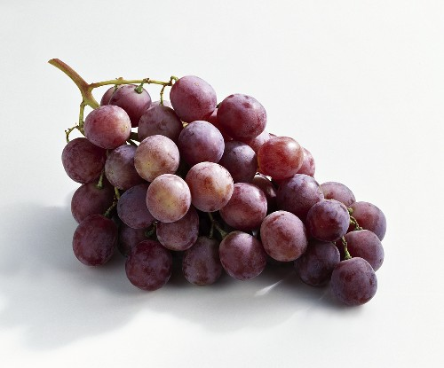 Red grapes, variety: Palieri (Vitis vinifera) from Italy