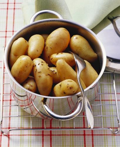 Neue Kartoffeln mit Kümmel im Kochtopf
