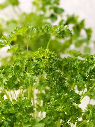 Curled parsley