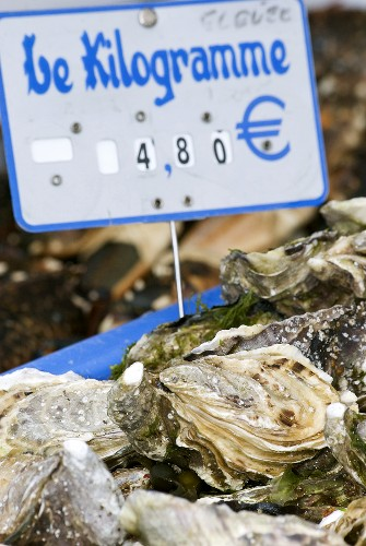 Fresh oysters with price sign on a market stall (France)