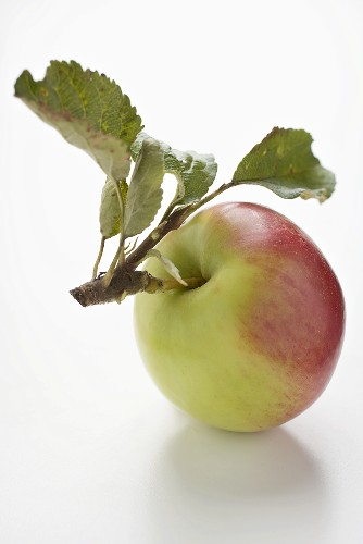 Red and green apple with stalk and leaves