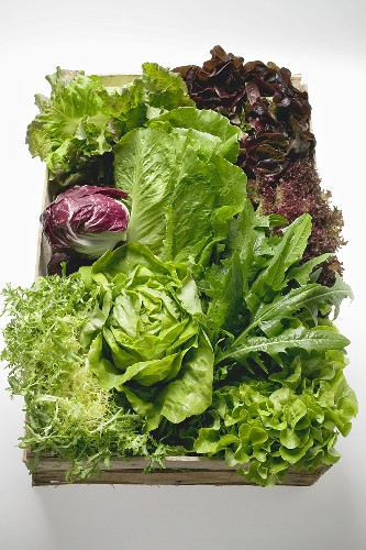 Assorted lettuces and salad leaves in crate