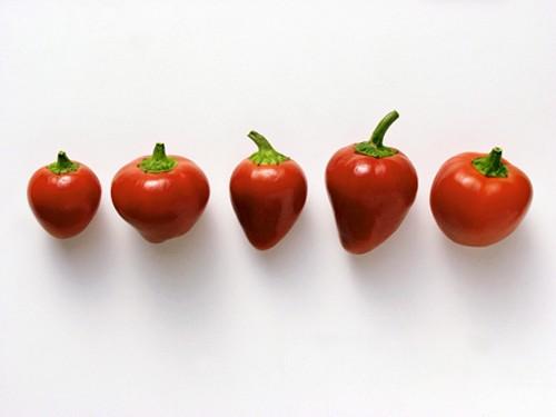 Hungarian cherry chili peppers