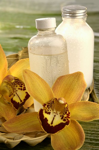 Toner and yellow orchid flower