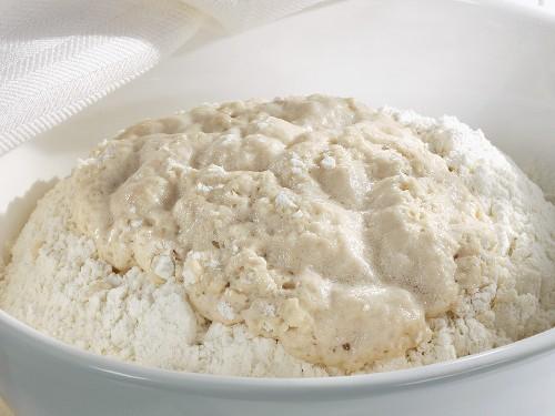 Yeast dough (yeast sponge)