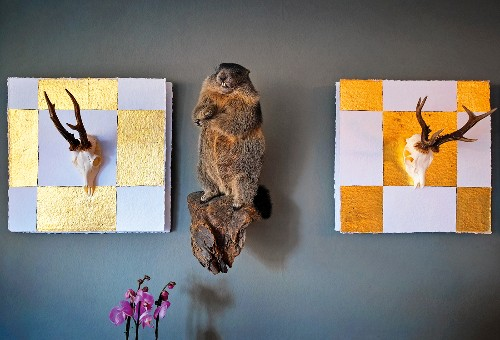 Stuffed rodent and head with horns on the wall