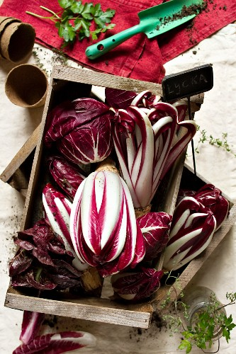 Assorted types of radicchio in a wooden box