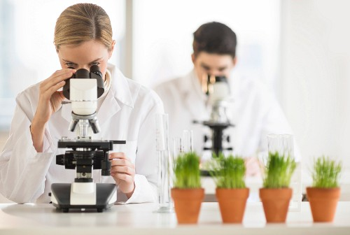 Scientists looking through microscopes in the laboratory