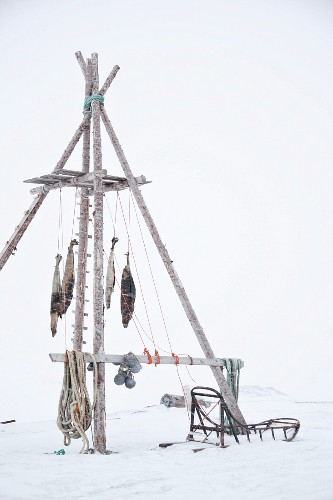 Seal meat hanging from a wooden frame (Spitsbergen, Norway)