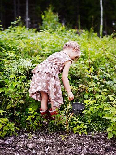 Little girl picking berries