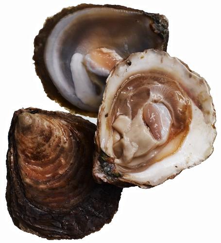 Belon Austern Kaufen