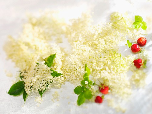 A still life featuring elderflowers and strawberries