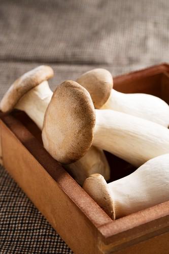 King trumpet mushrooms (Pleurotus eryngii) in a wooden box
