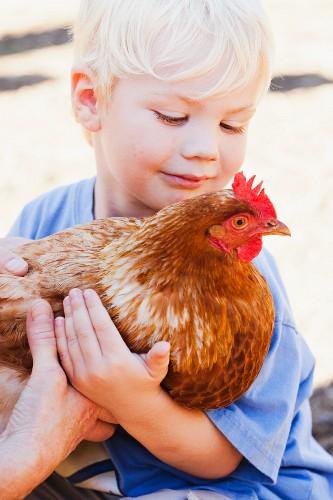 Kind hält ein lebendiges Huhn