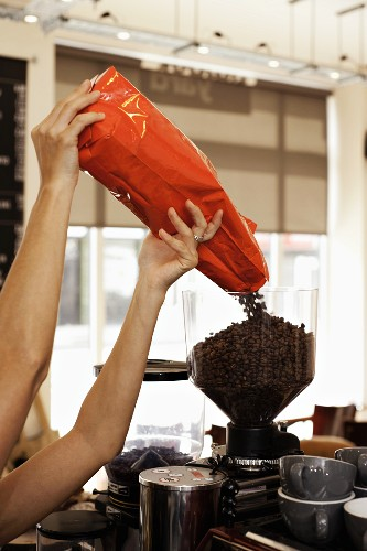 A barista tipping coffee beans into a coffee grinder