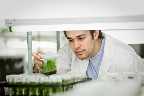 Middle Eastern scientist working in laboratory
