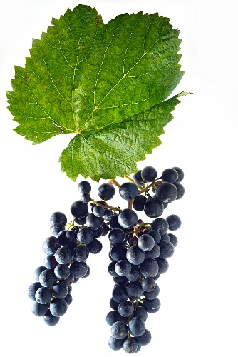 Malbec grapes with a vine leaf
