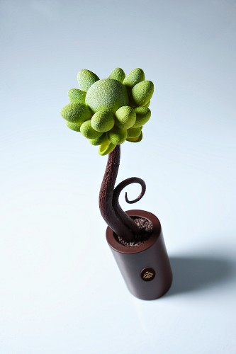 A chocolate flower
