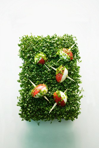 Tomato and quail's egg skewers on a bed of fresh cress