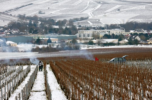Pruning in the premier cru Vaillons vineyard with La Chablisienne co-operative winery beyond, in the town of Chablis. Yonne, France.