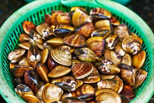 Venus clams in a plastic basket at a market in Heiphong, Vietnam