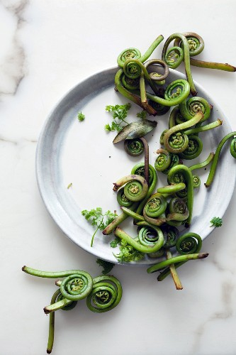 Fiddleheads (young fern shoots, Canada)