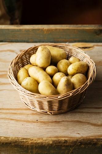 A basket of fresh Amandine potatoes