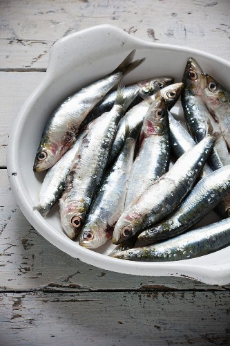 Fresh, raw sardines