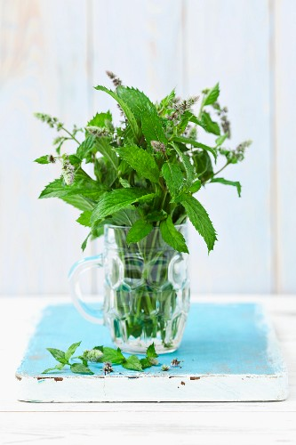 Fresh, flowering mint in a glass of water