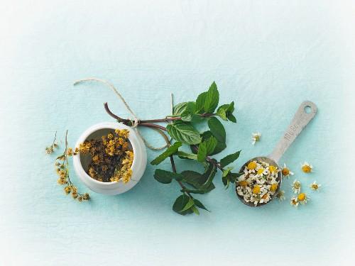 Various medicinal herbs being dried