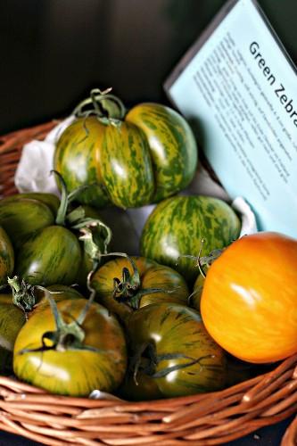 A basket of Green Zebra tomatoes
