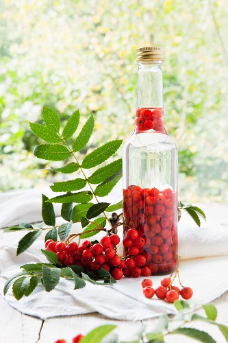 Rowan berries being steeped in alcohol to make schnapps