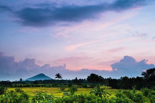 A landscape of rice paddies near Dambulla at sun rise, Central Province, Sri Lanka