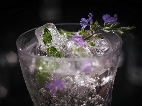 Exotischer Drink mit Katzenminze und Eiswürfeln (Essblüten und in Eiswürfel eingefrorene Blätter)