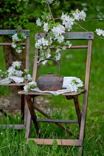 A teapot on a chair decorated with apple blossom