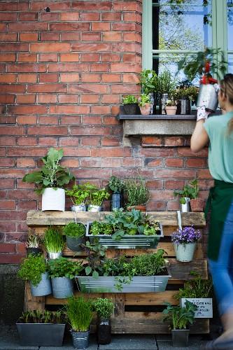 Palette umfunktioniert als Pflanztreppe vor Hauswand