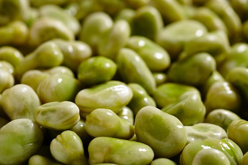 Poached fava beans (close-up)