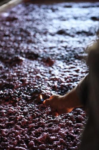 Fermenting red wine mash