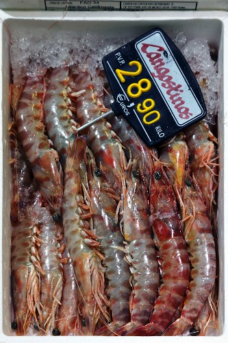 Scampi at a fish market in Bilbao, Basque Country, Spain
