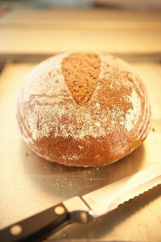 Ein Laib Kartoffelbrot, daneben Brotmesser