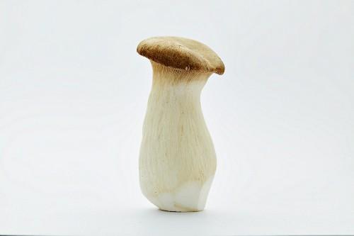 A brown king trumpet mushrooms (pleurotus eryngii)