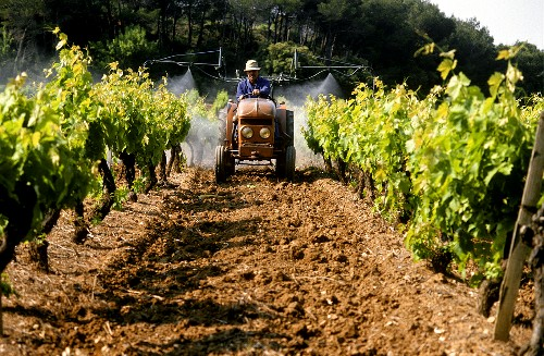 Widely spaced vine rows permit use of tractors in Provence
