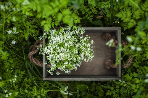 Wild herbs in a wooden crate in a garden