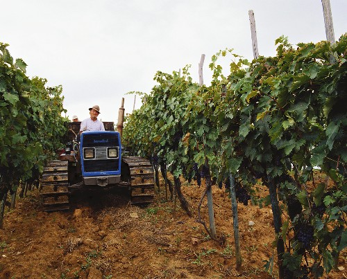Wine grower on tractor between vine rows for Chianti Classico