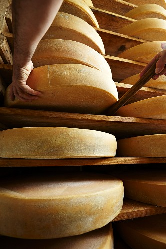 Ripening mountain cheese in an alpine dairy in Tyrol